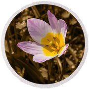 Pink And Yellow Tulip On Sepia Background Round Beach Towel