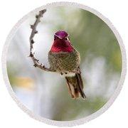 Pink Anna's Hummingbird Round Beach Towel