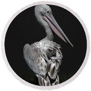 Pink-backed Pelican Rear View Round Beach Towel