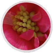 Pink Begonia Stamen - Macro Round Beach Towel