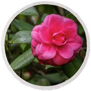 Round Beach Towel featuring the photograph Pink Camelia 02 by Gregory Daley  PPSA