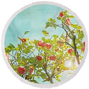 Pink Camellia Japonica Blossoms And Sun In Blue Sky Round Beach Towel