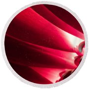 Pink Chrysanthemum Flower Petals  In Macro Canvas Close-up Round Beach Towel