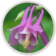 Pink Columbine - D010096 Round Beach Towel