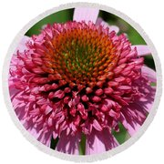 Pink Coneflower Close-up Round Beach Towel