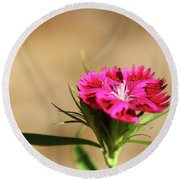 Pink Dianthus Round Beach Towel by Jimmy Ostgard