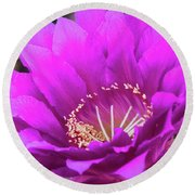 Round Beach Towel featuring the photograph Pink Echinopsis Bloom  by Saija Lehtonen