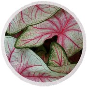 Pink Elephant Ears Closeup Round Beach Towel