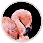 Pink Flamingo On Black Round Beach Towel