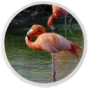 Round Beach Towel featuring the photograph Pink Flamingo by Scott Carruthers