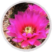 Pink Hedgehog Flower Round Beach Towel