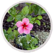 Pink Hibiscus And Wheel Round Beach Towel