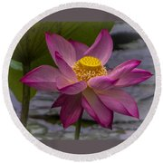 Pink Lotus In Vietnam Round Beach Towel by Venetia Featherstone-Witty