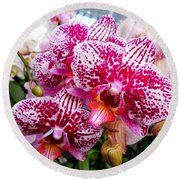 Pink Moth Orchids Round Beach Towel