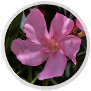 Pink Oleander Round Beach Towel