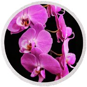 Pink Orchid With Black Background Round Beach Towel