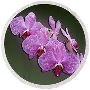 Pink Orchids Round Beach Towel by John Haldane