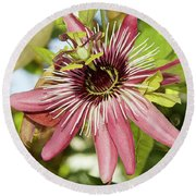 Pink Passiflora Round Beach Towel by Elvira Ladocki