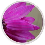 Pink Ray Florets Round Beach Towel