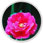 Pink Rose In Bremerton Round Beach Towel
