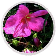 Pink Rose Mallow In Colorado Round Beach Towel