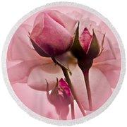 Roses In Pink Mist Round Beach Towel by Carol F Austin