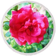 Pink Roses In Bremerton Round Beach Towel