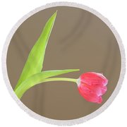 Round Beach Towel featuring the photograph Pink Tulip by Alana Ranney
