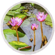 Pink Water Lilies In A Pond Round Beach Towel