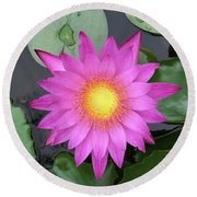 Pink Water Lily Flower Round Beach Towel by Tony Grider