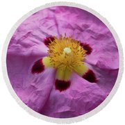 Pink Wrinkles Round Beach Towel by Mitch Shindelbower