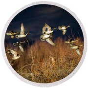 Pintails And Wigeons Round Beach Towel