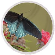 Pipevine Swallowtail Round Beach Towel