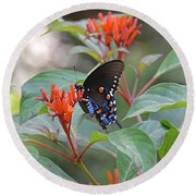 Pipevine Swallowtail Butterfly On Firebush Round Beach Towel