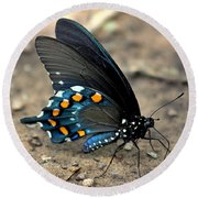 Pipevine Swallowtail Close-up Round Beach Towel