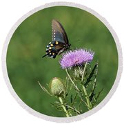 Round Beach Towel featuring the photograph Pipevine Swallowtail by Sandy Keeton