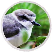 Round Beach Towel featuring the photograph Piping Plover by Anthony Jones