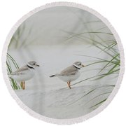 Piping Plovers Round Beach Towel