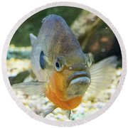 Piranha Behind Glass Round Beach Towel