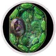 Plant Cell Round Beach Towel by Russell Kightley