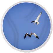 Playing Terns Round Beach Towel