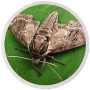 Plebeian Sphinx Moth Round Beach Towel