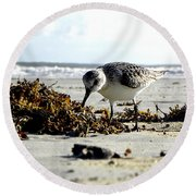 Plover On Daytona Beach Round Beach Towel