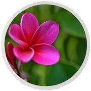 Plumeria - Royal Hawaiian Round Beach Towel