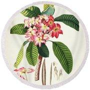 Plumeria Botanical Print Round Beach Towel