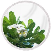 Round Beach Towel featuring the photograph Plumeria by Cindy Garber Iverson