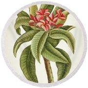 Plumeria Rubra Botanical Print Round Beach Towel