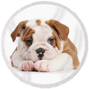 Po-faced Bulldog Round Beach Towel