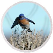 Poised To Fly Round Beach Towel