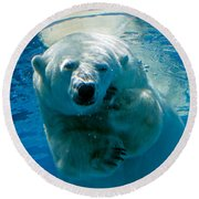 Round Beach Towel featuring the photograph Polar Bear Contemplating Dinner by John Haldane